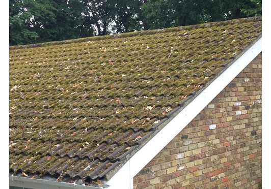 Abundance of moss on roofs due to mild Winter